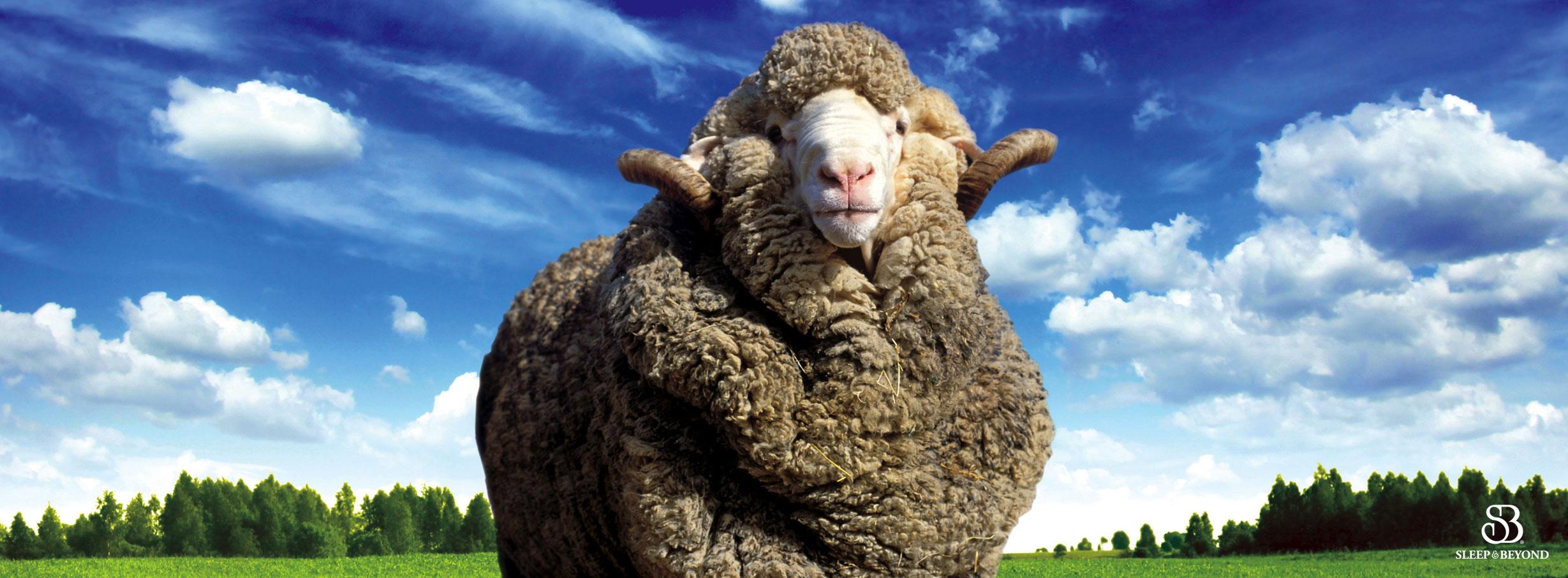 organic-merino-wool-slider