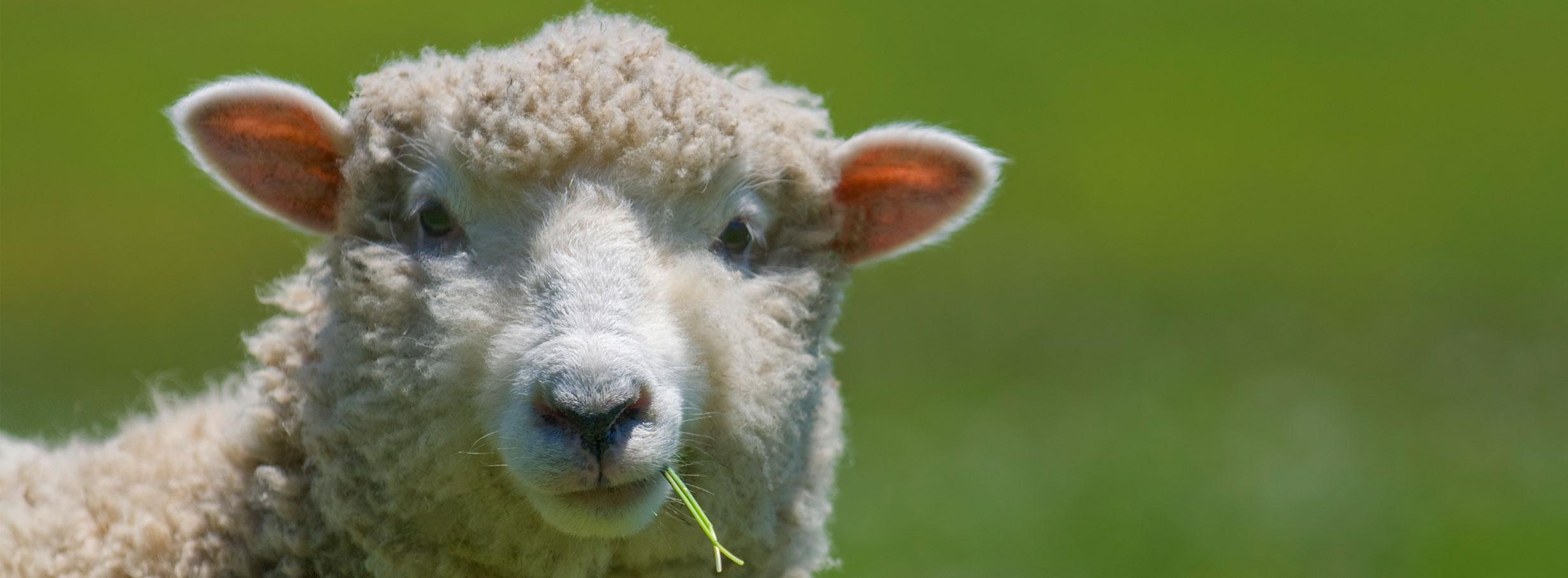 Merino Wool Comforter
